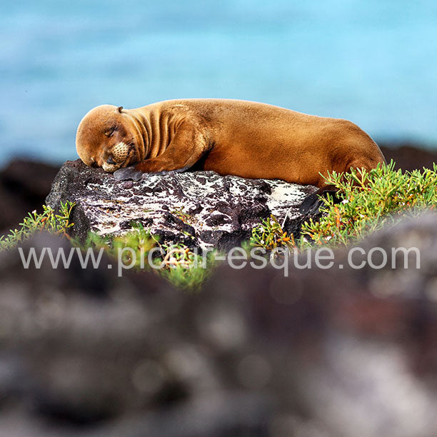 Baby Sea Lion Blank Greetings Card