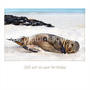 'Just Chilling' Blank Sea Lion Birthday Card