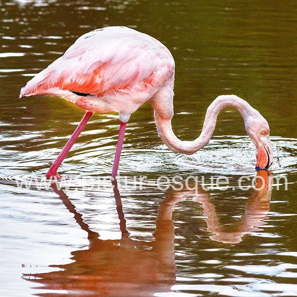 'Flamingo' Blank Square Greetings Card