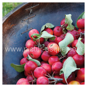 A vibrant collection of crab apples in a wooden bowl