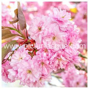 Spring Blossom Blank Greetings Card