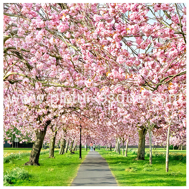 Stray Blossom Harrogate Blank Greetings Card