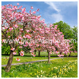 Blossom Trees Harrogate Stray Greetings card