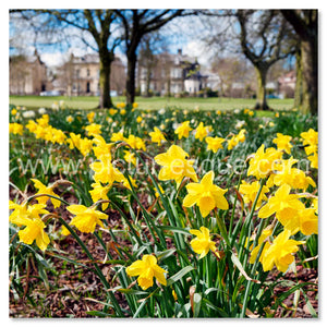Stray Daffodils Harrogate Personalised Handwritten Card