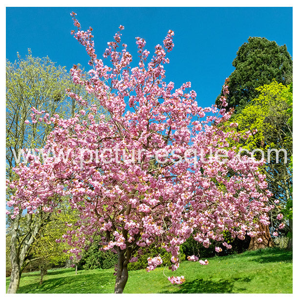 Blossom Knaresborough Blank Greetings Card