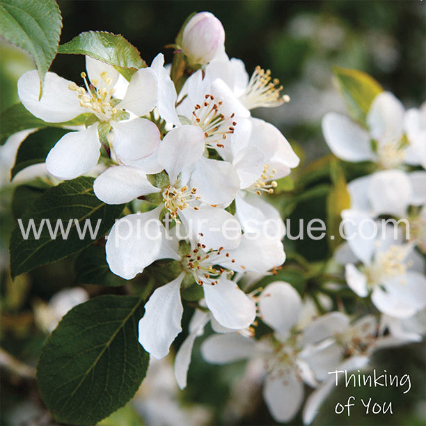 White Blossom Thinking of you sympathy card