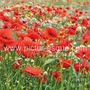 Poppy meadow thinking of you card