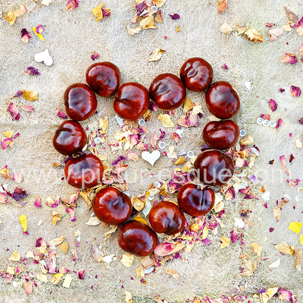 Love Conkers All Blank Card