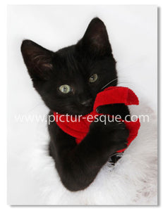 Black Kitten Christmas Card by Charlotte Gale
