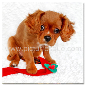 6 Spaniel Dog Christmas Cards
