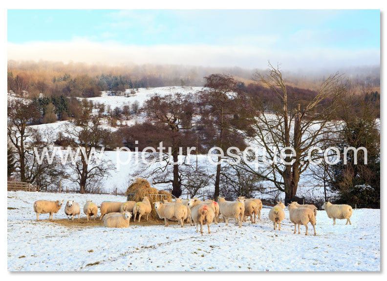 Flock of sheep in the snow Christmas card