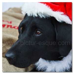 Pepper the Dog Christmas card
