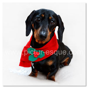 Single Dachshund Dog Christmas Card