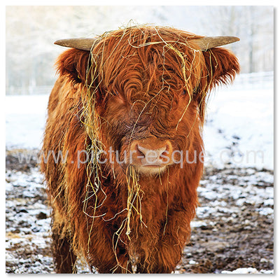 Highland Calf Farming Christmas Card by Charlotte Gale