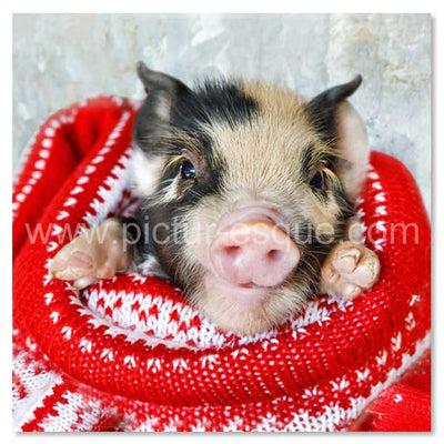 'Pigs in Blankets' Blank Mini Notecards