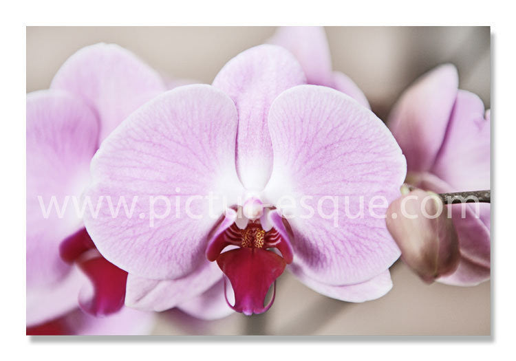 Blank Orchid Notecards