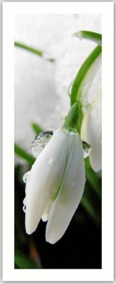 Snowdrop Gift Tag