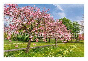 Blossom Trees Harrogate Blank Notecards