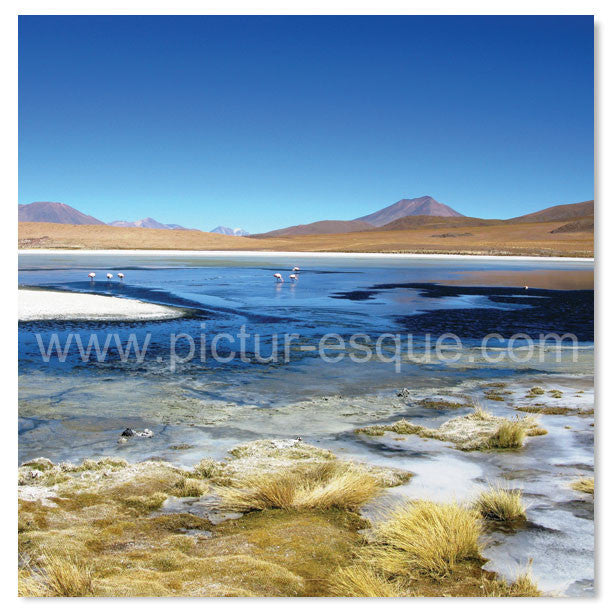 Flamingo Lake, Bolivia by Charlotte Gale