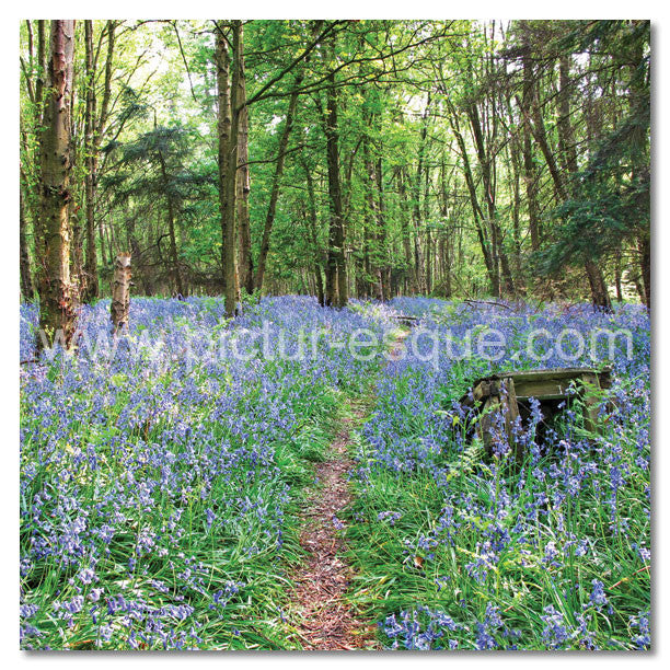 Bluebells by Charlotte Gale