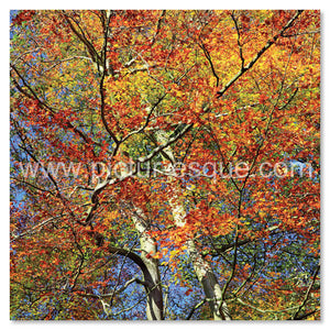Autumn branches by Charlotte Gale