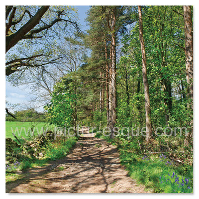 Bathing Well Wood Harrogate blank card