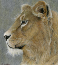 Load image into Gallery viewer, Lioness