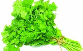 Coriander Leaves ધાણાં