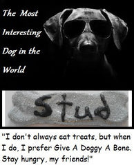 For the Big Dogs: The Studster