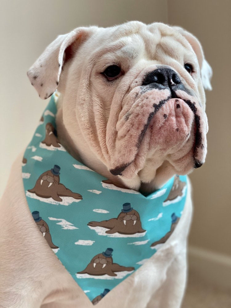 A little bit Fancy Reversible Snap Bandana
