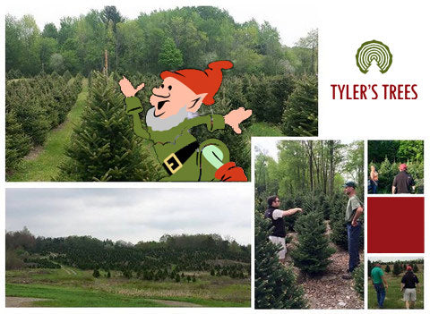 Tyler's Trees Serching for the Perfect Tree.
