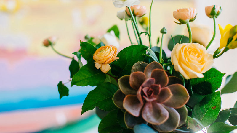 How to Plant the Succulent From Your Bloom2Bloom Bouquet