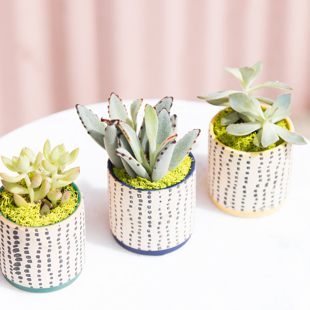 The Two Reasons Your Succulents Keep Dying
