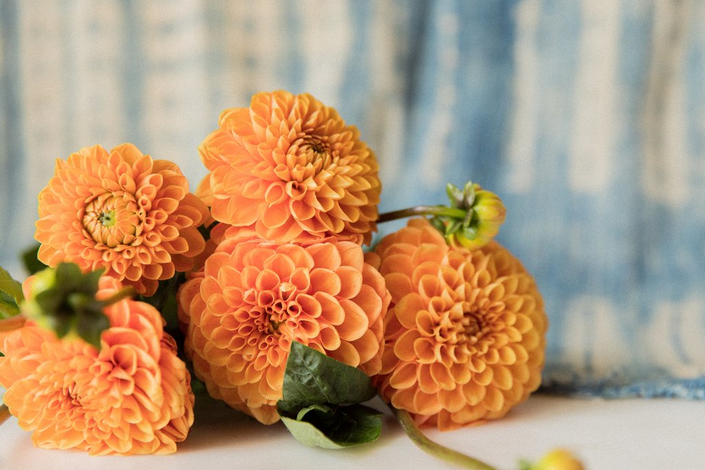 Floral Friday: Summer Dahlias