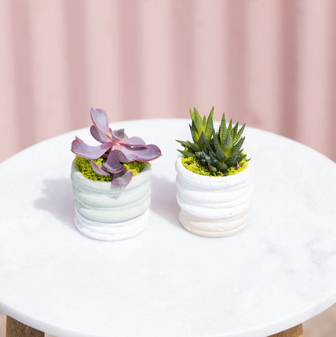 Two-tone Succulent Duo