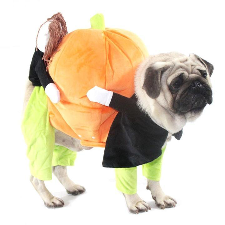 Pumpkin Carrying Halloween Dog Costume
