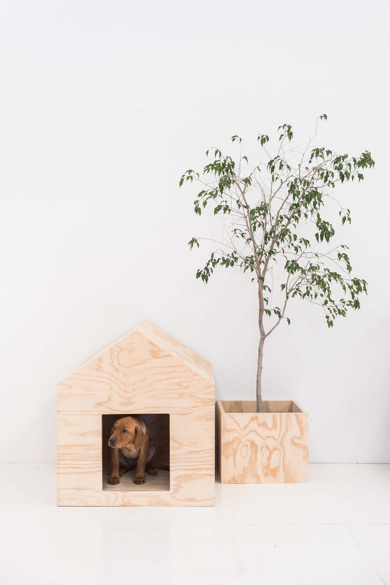 cute labrador puppy in wooden dog kennel with tree next to it