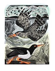 Angela Harding - Redshank And Oystercatcher