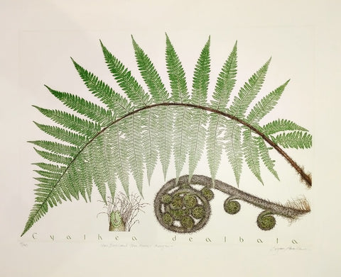 Bryan Poole - Cyalhea Dealbata, New Zealand Tree Fern, Punga by Bryan Poole, 2007