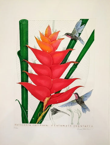 Bryan Poole - Heliconia Bihai, Eulampis Jugularis & Heliconia Caribaea, Eulampis Jugularis: 15/100, Pair of Etchings by Bryan Poole, 2008