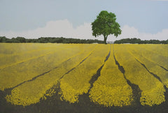 Michael Papworth - Yellow Fields