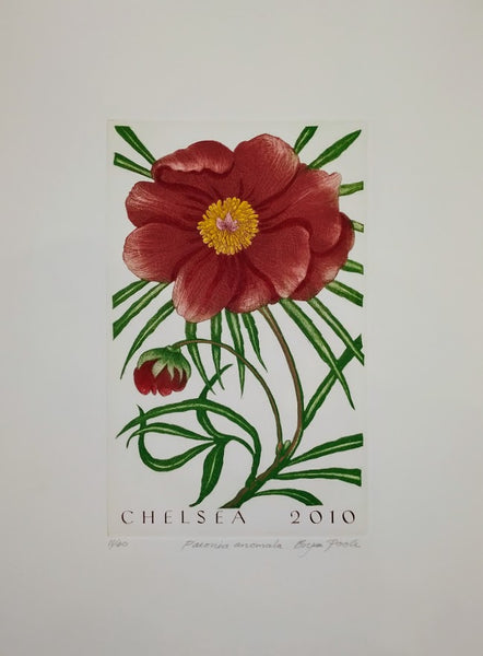 Paeonia anomala, Chelsea, 2010 by Bryan Poole