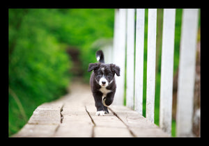Klappkarte Border Collie