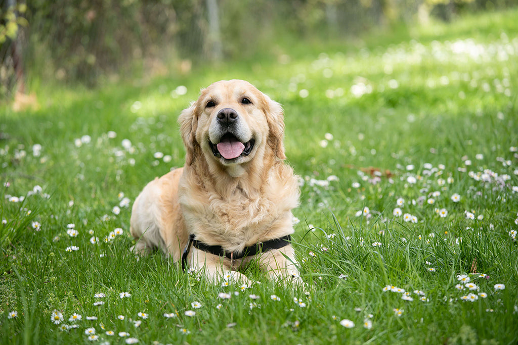 Dog Stung By Bee? Here's What To Do