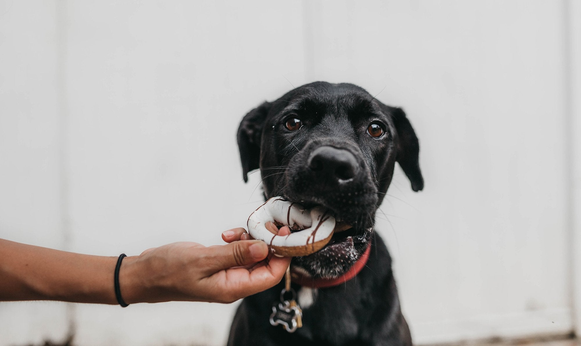 what-should-your-dog-really-be-eating
