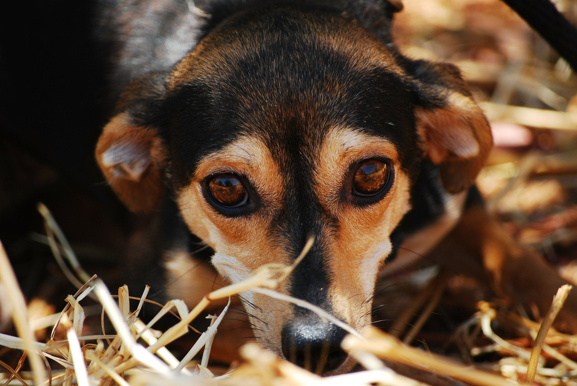 Scared dog with big eyes in long grass