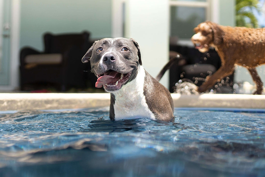 Dog Swimming: What Are The Benefits?