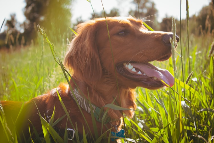 Are Your Dog's Behaviour Problems Linked To Their Gut Health?