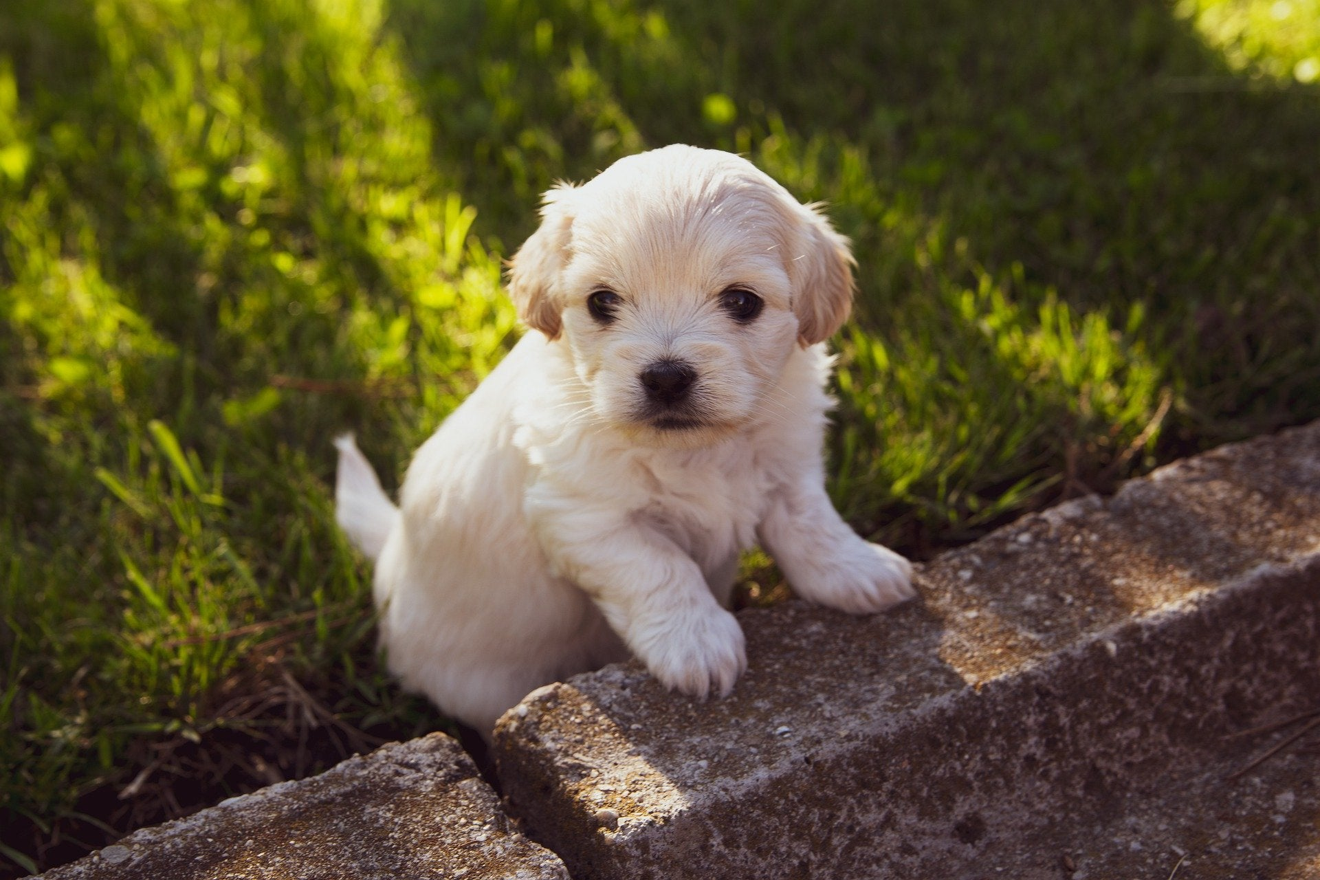7 Things To Remember For Your New Fluffy Family Member!