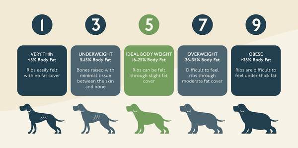 Is Your Dog Over Weight?